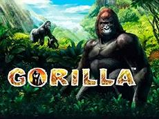 Slot Gorilla recensione